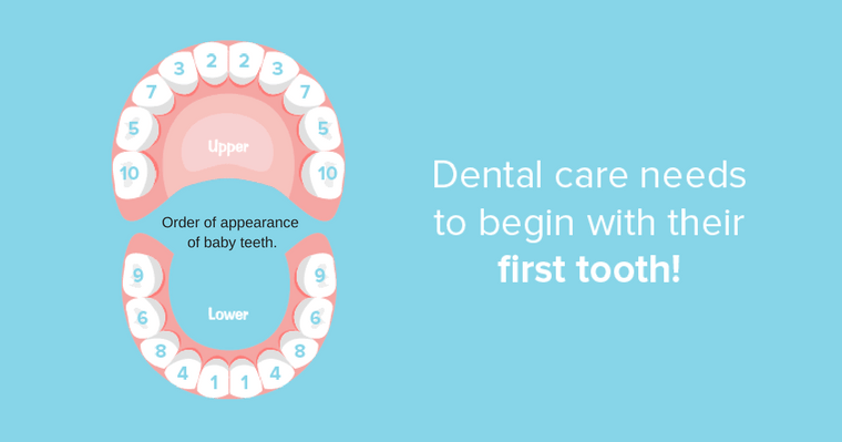 Dental care begins with the first tooth. Healthy baby teeth will grow into healthy adult teeth.